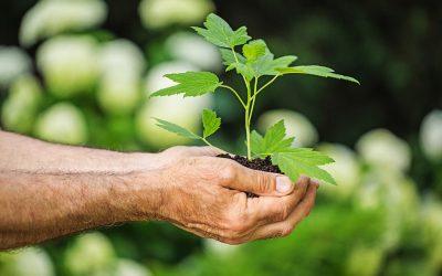 Tree Planting on BDHACC property 2016