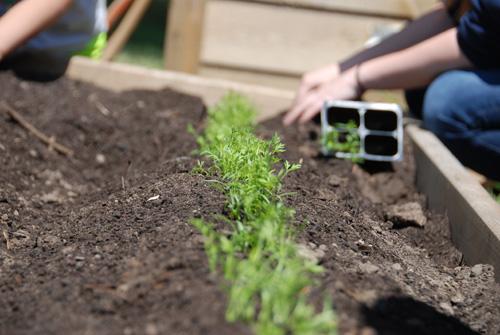 Vegetable Garden for Women's Shelter